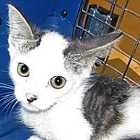 Adopt A Pet :: 360605 - Wildomar, CA