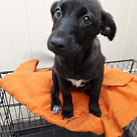 Adopt A Pet :: Hazel - LAKEWOOD, CA