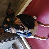 Adopt A Pet :: Keyloe - Camden, DE