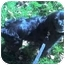 Photo 1 - Cocker Spaniel Mix Dog for adoption in Osseo, Minnesota - Henry
