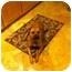 Photo 3 - Pit Bull Terrier/Rhodesian Ridgeback Mix Dog for adoption in Los Angeles, California - Harlie Quinn