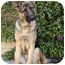 Photo 3 - German Shepherd Dog Dog for adoption in Los Angeles, California - Lady Bug von Amsel