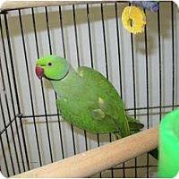 Adopt A Pet :: PACO - Mantua, OH