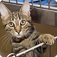 Adopt A Pet :: Morgan - New Port Richey, FL