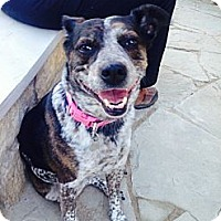Adopt A Pet :: Isis - Kingwood, TX