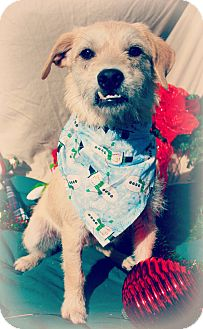 Terrier (Unknown Type, Medium) Mix Dog for adoption in Gainesville, Florida - Tipper