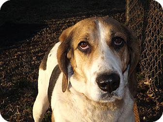 Hound (Unknown Type) Mix Dog for adoption in Thomaston, Georgia - Halley