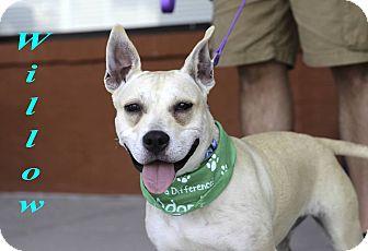 Labrador Retriever/Cattle Dog Mix Dog for adoption in Alpharetta, Georgia - Willow