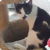 Adopt A Pet :: Patch - Pasadena, CA