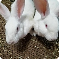 Adopt A Pet :: Blake and Marshmallow - Conshohocken, PA