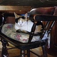 Adopt A Pet :: Josephine - Charlotte, NC