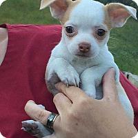 Adopt A Pet :: Mariana - Washington, DC