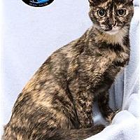 Adopt A Pet :: Snicks - Howell, MI