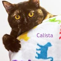 Adopt A Pet :: Calista - Cedar Rapids, IA