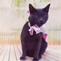 Adopt A Pet :: Freida - McDonough, GA