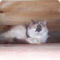 Adopt A Pet :: Virgina - Portland, ME