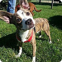 Adopt A Pet :: Ty Ty - Silver Lake, WI