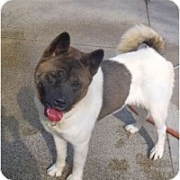 Adopt A Pet :: Mai Tai - East Amherst, NY
