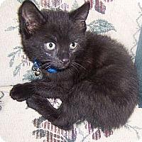 Adopt A Pet :: Gambit - Gray, TN