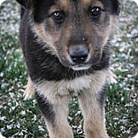 Adopt A Pet :: Sansa - Broomfield, CO