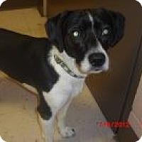 Adopt A Pet :: Bo Bo - Houston, TX