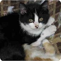Adopt A Pet :: Jill - Warren, MI