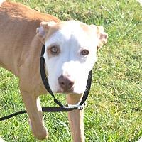 Adopt A Pet :: Daisey - Tumwater, WA