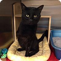 Adopt A Pet :: Doc - Muncie, IN