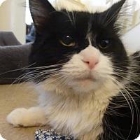 Adopt A Pet :: Jellybean - Colmar, PA
