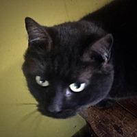 Adopt A Pet :: Cheyenne - Covington, KY