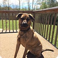Adopt A Pet :: Edith - Greenville, SC