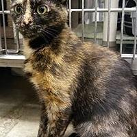 Adopt A Pet :: LM-Isabella - Devon, PA