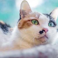 Adopt A Pet :: Kiki - Palm Coast, FL