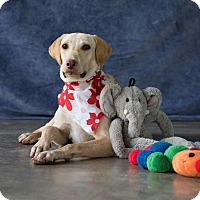 Adopt A Pet :: Goldie - Vancouver, BC