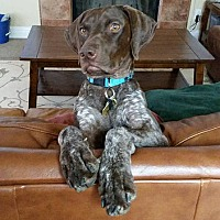 Adopt A Pet :: Little Lucy - Menlo Park, CA
