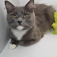 Adopt A Pet :: Khaleesi - Alpharetta, GA