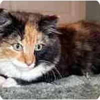 Adopt A Pet :: Cassandra - Arlington, VA