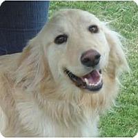 Adopt A Pet :: Max - Arlington, TX