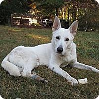Adopt A Pet :: Ace - Conyers, GA