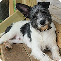 Adopt A Pet :: *Jerry - PENDING - Westport, CT