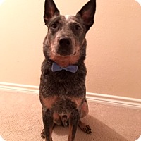 Adopt A Pet :: Chewy - Houston, TX