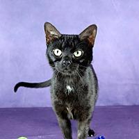 Adopt A Pet :: Esmeralda - Columbia, IL