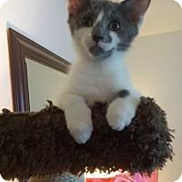 Adopt A Pet :: VINNY - Burlington, NC