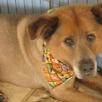 Adopt A Pet :: Champ - Beaumont, TX