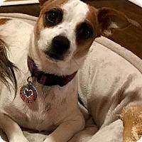 Adopt A Pet :: Aggie - Cary, NC