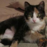 Adopt A Pet :: Cassiopeia - Owatonna, MN