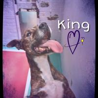 Adopt A Pet :: King - Chattanooga, TN