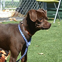 Mixed Breed (Small) Mix Dog for adoption in Meridian, Idaho - Stewie