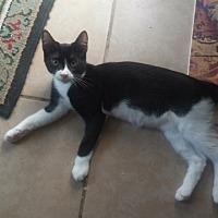 Adopt A Pet :: Hunter - Centerton, AR