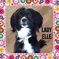 Adopt A Pet :: Lady Elle - Santa Barbara, CA